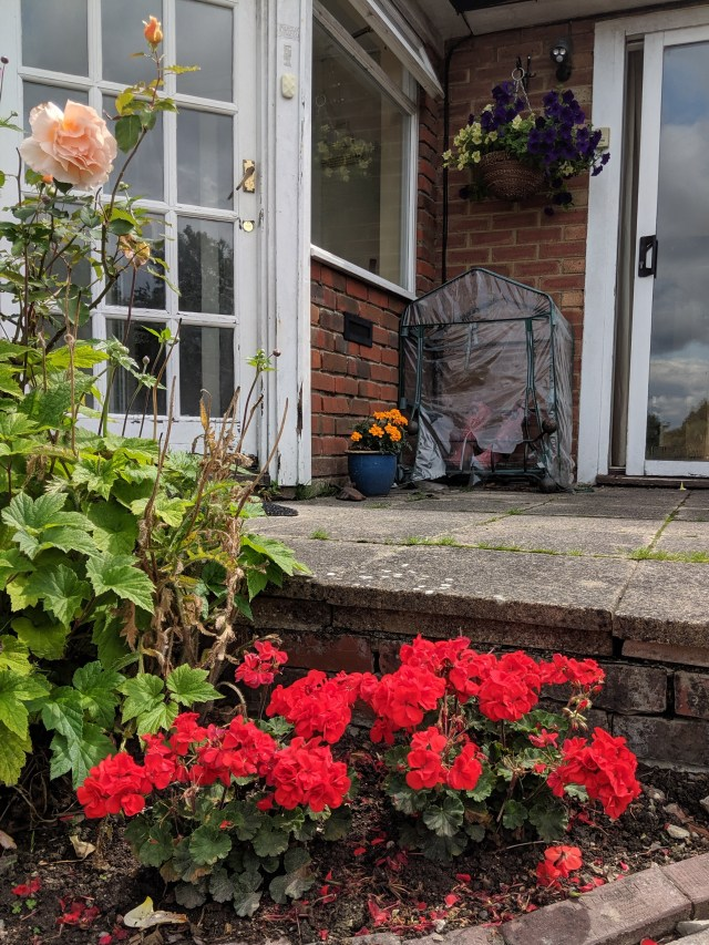 Geraniums, Roses, Marigolds and (the oft featured) Petunias