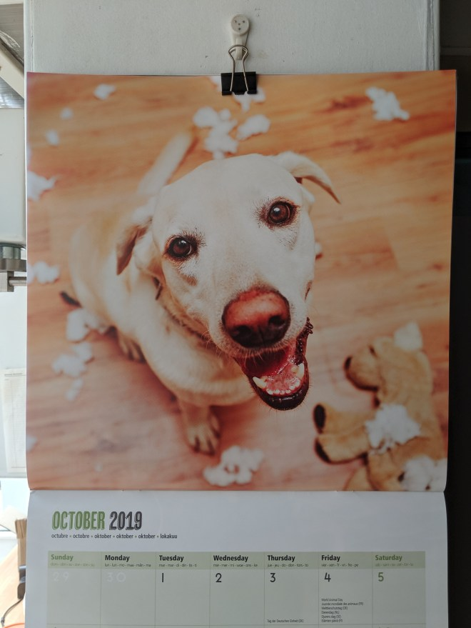 October 2019 calendar dog confetti