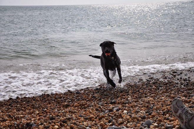 Chasing balls in the surf after a long walk