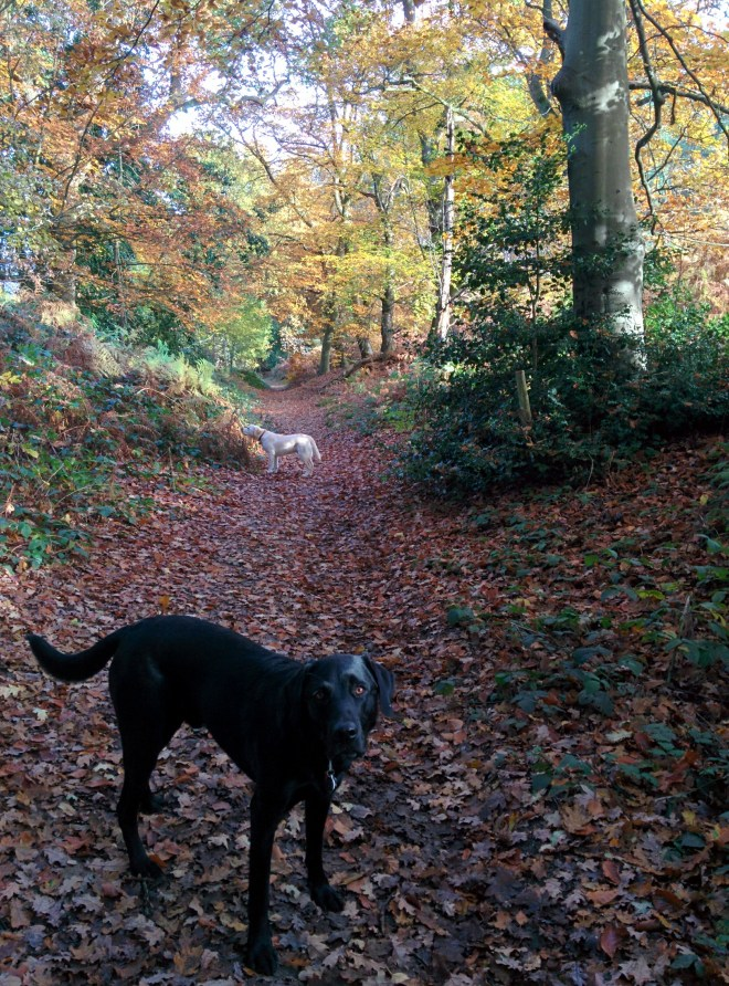 More of Sandy lane in the autumn