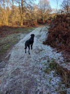 Frosty walk around Puttenham common