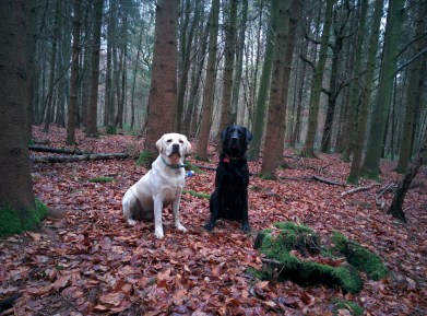 Boys posing for me in the Manor copse woods