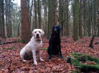 (Distracted) boys posing for me in the Manor copse woods