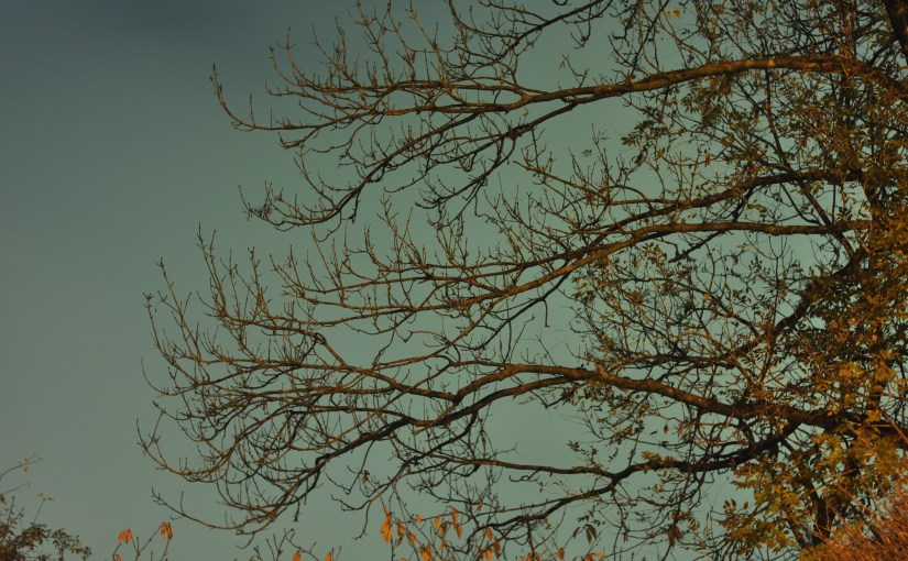 Night Autumn Tree