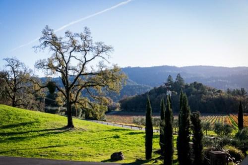 golden vineyards