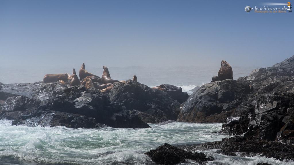 Steller sea lions on the Broken Islands