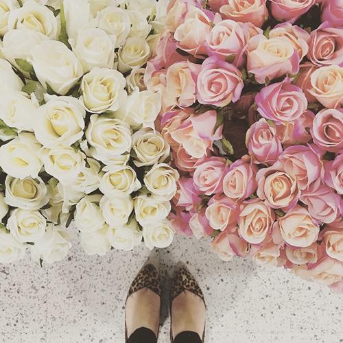 june bites… roses