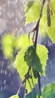 降り注ぐ恵みの雨の中