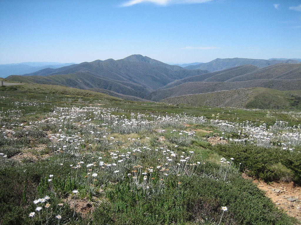 Mt Feathertop 1, Alpine National Park