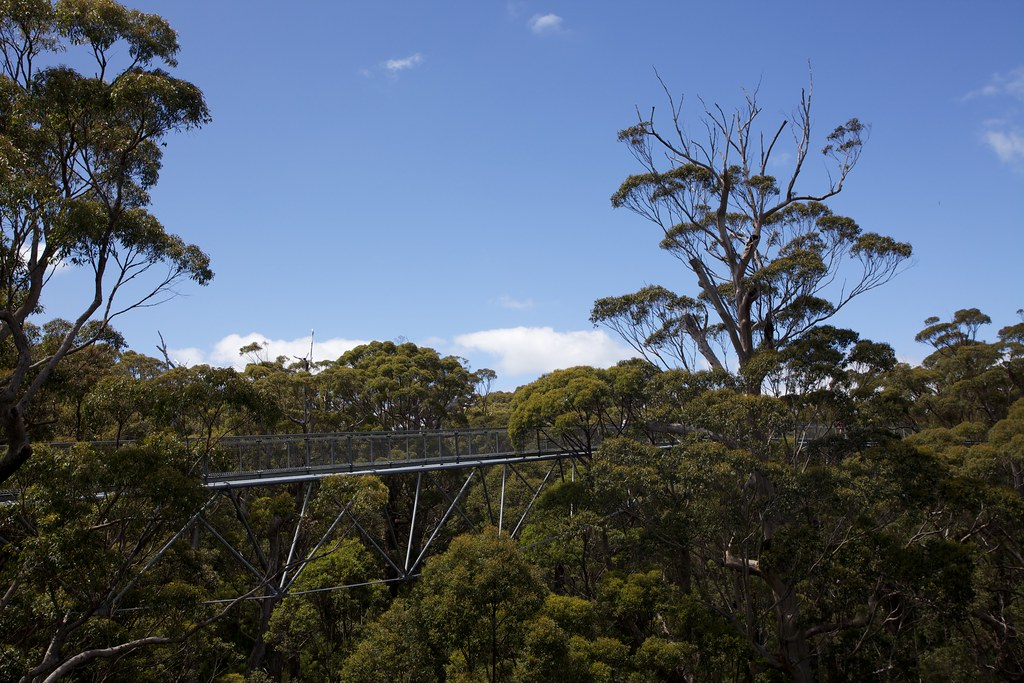 Treetop Walk Valley of the Giants, Denmark, Western Australia