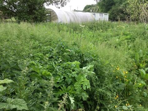 Farm 3.5
