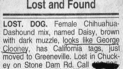 cat-found-lookslikedog1