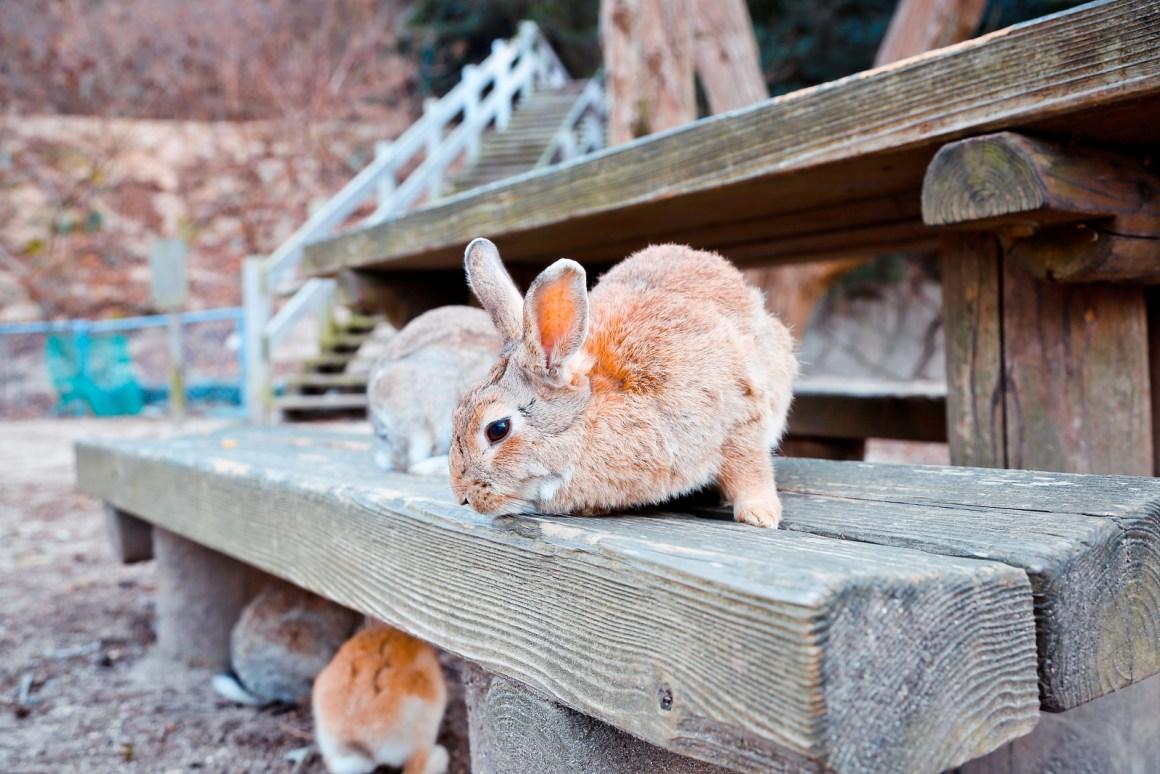 大久野島兔子島 Hiroshima 196