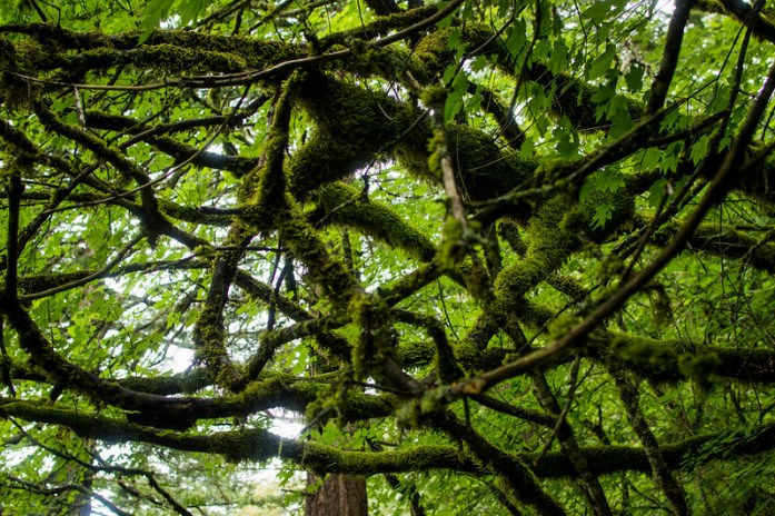 Multnomah Falls Washington Evergreen