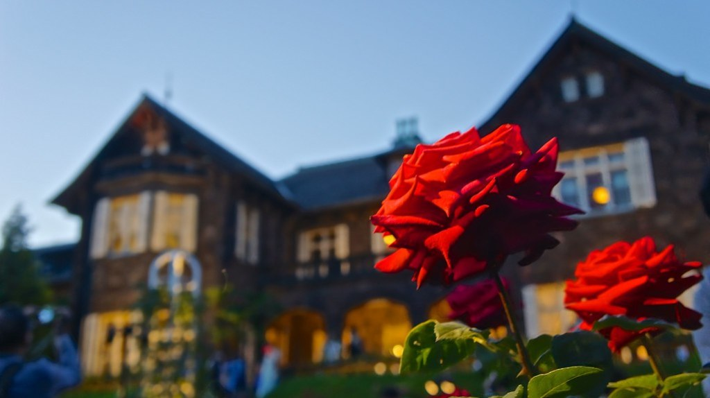 Rose flowers at Kyu Furukawa Gardens. 旧古河庭園