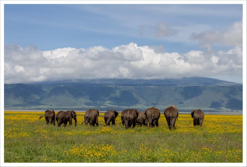 Tanzania-97