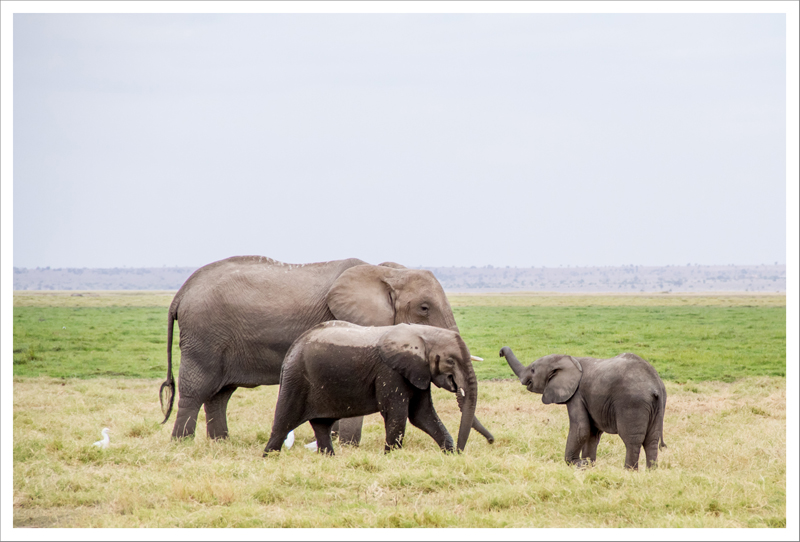 Amboseli-58