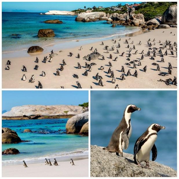 Boulders beach Ciudad del Cabo