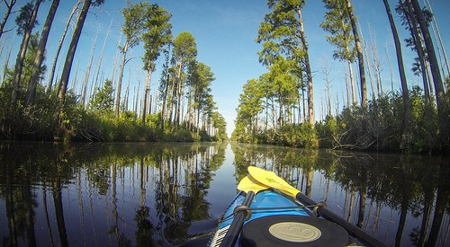 Lowcountry Unfiltered at Okefenokee-42