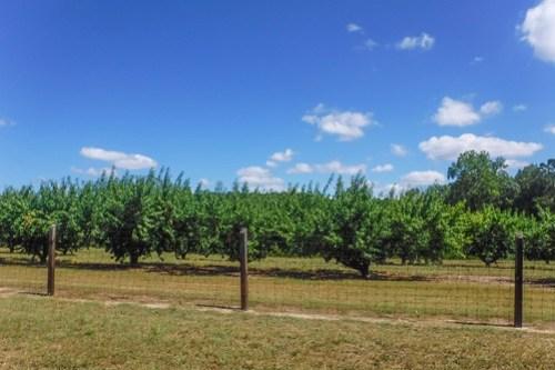 Clemson Fruit Research Center