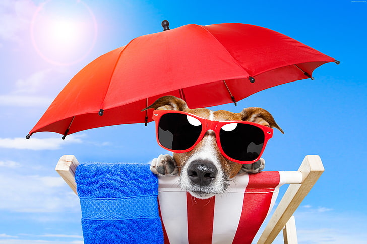 Hd Wallpaper Sun Beach Umbrella Animal Summer Puppy Sunglasses Vacation Wallpaper Flare