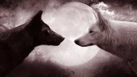 HD wallpaper: wolf wolves full moon black wolf white wolf animals fantasy art Wallpaper Flare