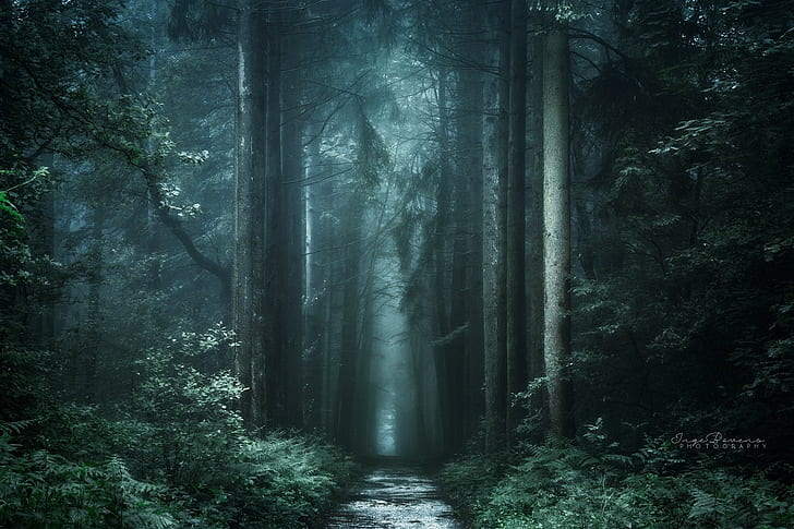 ✓ free for commercial use ✓ no attribution required ✓ high quality images. Hd Wallpaper Dark Fall Forest Landscape Nature Path Photography Plants Wallpaper Flare