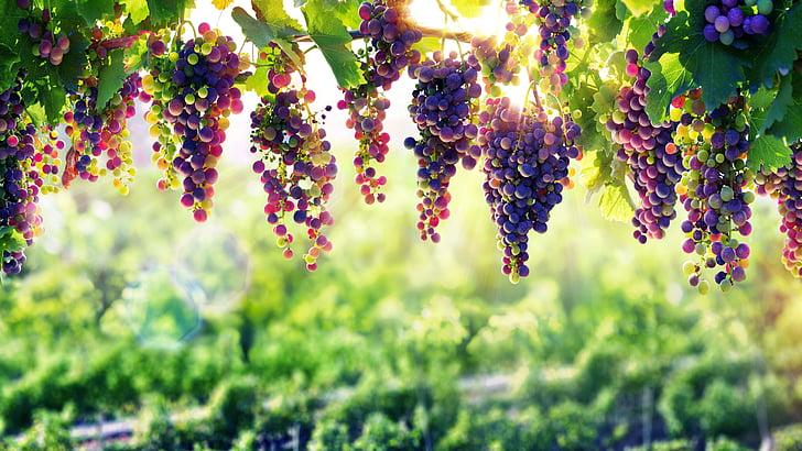 HD wallpaper: grapevine, 8k, nature, arbor, 8k uhd, flora, plant, sunlight  | Wallpaper Flare