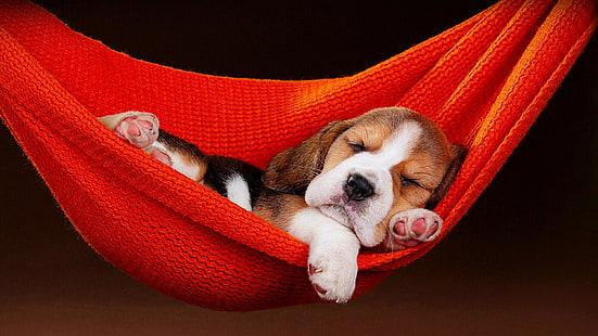 Cute Wallpapers 1080p Beagles Hd Wallpaper Dogs Rottweiler Wallpaper Flare