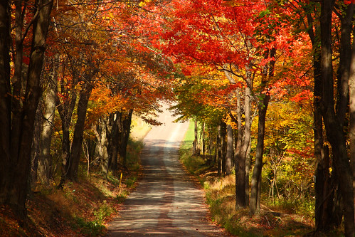 Michigan Fall Colors Wallpaper Fall Foliage Near Pack Saddle Covered Bridge During A