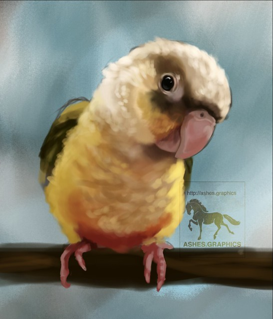 Colourful Bird Painting