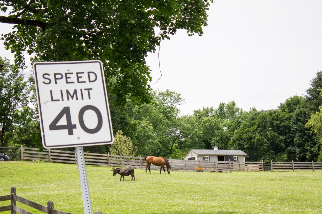 unionville-horse-donkey