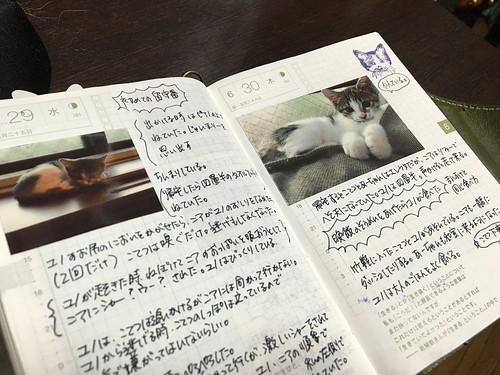 IMG_2677.JPG