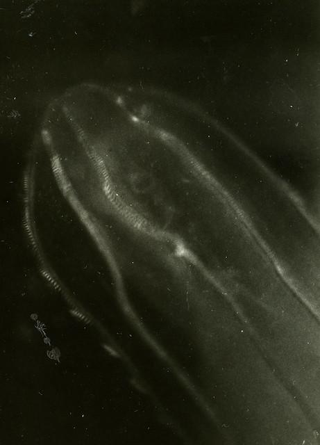 Мыс Картеш аквариум светящийся огурец