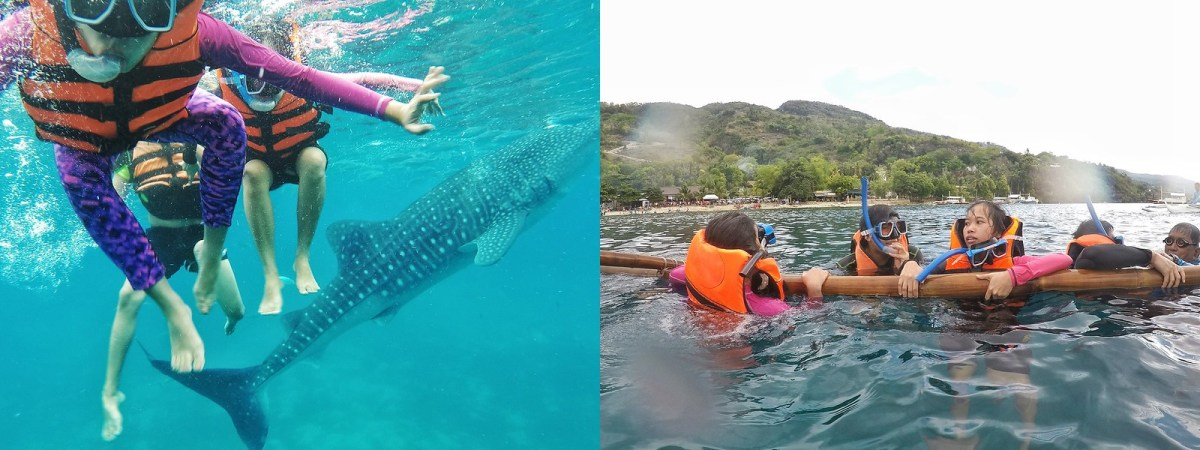 whale shark watching oslob