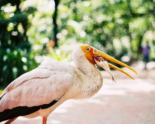 Bird with Fish
