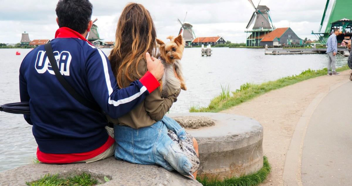 Amsterdam con Perro, Amsterdam con Mascotas Amsterdam con perro Visitar Amsterdam con perro 29397505276 63b649d362 o