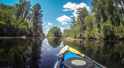 Lowcountry Unfiltered at Okefenokee-74
