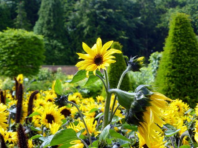 Bangor Walled Gardens July16