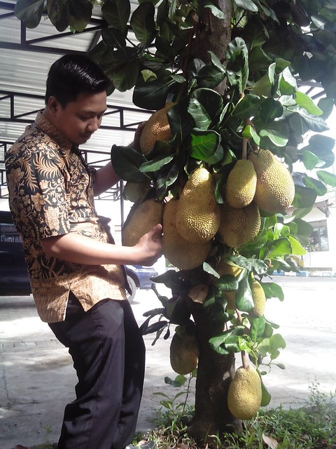 Salah seorang petugas keamanan menunjukkan buah nangka yang dimaksud(3/8)