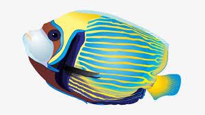 Fish Pic 2