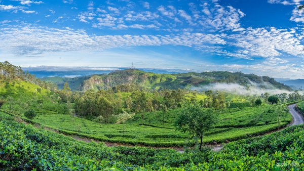 Panoramic View from Lipton's Seat - Haputale, Sri Lanka.jpg