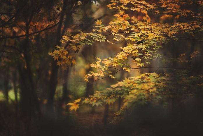 Bringing back Autumn