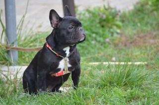 Dog Endurance Portacomaro (AT)