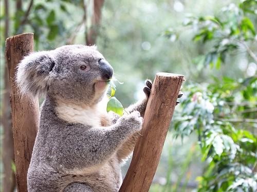 10 Tempat Wista Sydney - dianravi.com