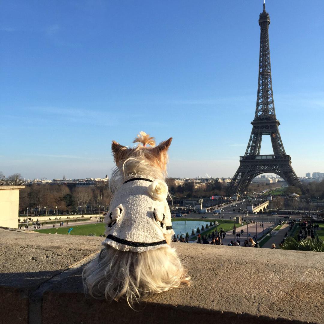 Viajar con Mascota mascotas Cómo viajar con perros y mascotas 30852509061 dc8e2ace2d o