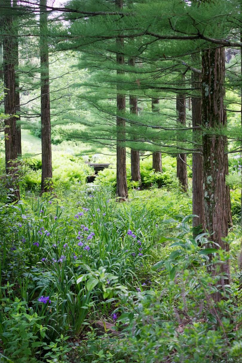 longwood-gardens-june-2016-woods