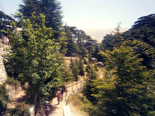 Path From the Entrance Cedar Of God