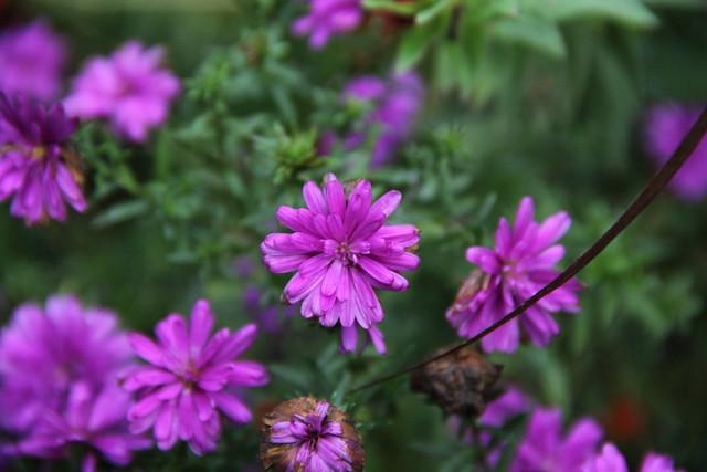 20161002_WV_Botanic_Garden_004