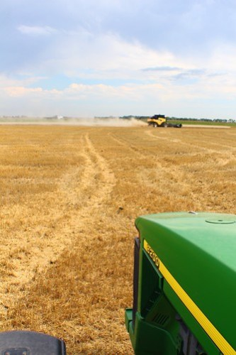View from the grain cart.